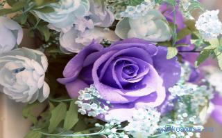 Фиолетовые розы сонник