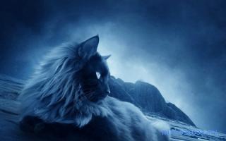 Сонник кот, кошка, толкование снов К чему снятся кошки