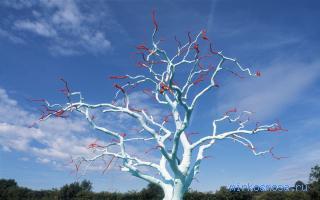 Дерево во сне к чему снится