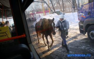 Автобус — Сонник Странника