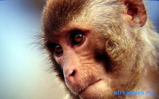 Позы в сексе обезьяна на дереве смотреть онлайн