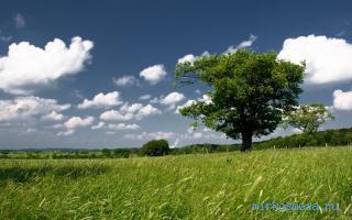 во сне видеть дерево