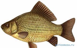 почему рыба плещется но не клюет
