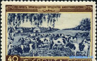 Корова — Сонник Хассе