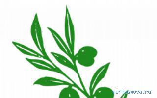ветви снятся к чему зеленые