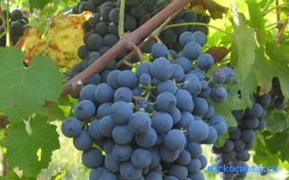 Виноград к чему снится сон
