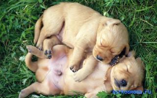 К чему снится собака ребенок
