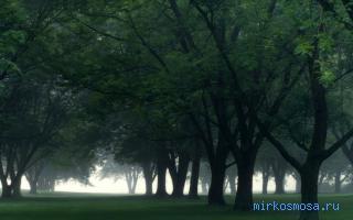 почему сниться дерево