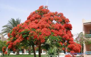 Дерево сон