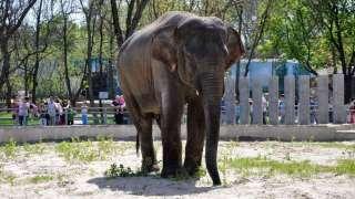 Всемирный день защиты слонов в зоопарках