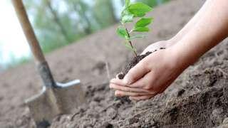 День посадки леса