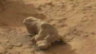 Ученые зафиксировали обитателей Марса