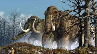 Учеными было выяснено, что мамонты погибли из-за непонятного вируса