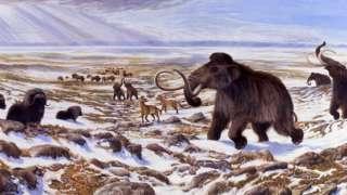 Ученые сумели доказать непричастность человека к вымиранию мамонтов и прочих редчайших животных