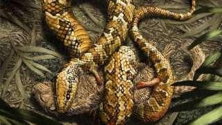 Палеонтологи обнаружили доисторическую змею с конечностями в количестве 4-х штук