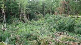 Необъяснимое явление в Челябинской области – вывал лесного массива загадочным образом