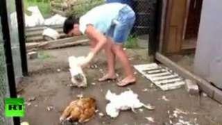 В уничтожении домашней птицы жители Давыдовки обвиняют чупакабру