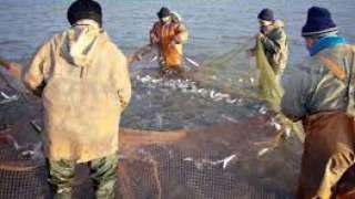 Биологи спрогнозировали процесс эволюции рыб, на который сильно повлияет массовый вылов рыбы
