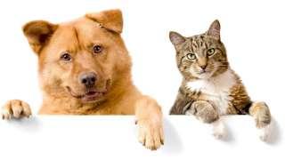 Животные с паранормальными целительными способностями