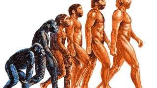 Возможно, в скором времени придется пересмотреть теорию происхождения человека