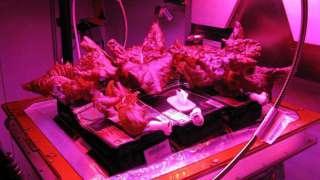 Первая дегустация «космического салата»