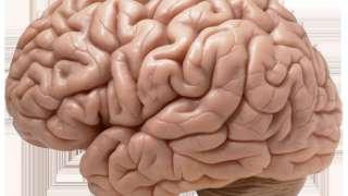 Ученые из Соединенных Штатов сумели вырастить прототип нашего мозга в искусственных условиях