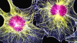 Молекулярные биологи теперь могут управлять стволовыми клетками с помощью лазера