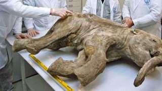 На территории России создали лабораторию по клонированию вымерших животных