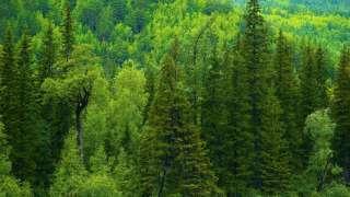 Рекордсменом по количеству растительности на планете оказалась Россия