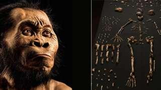 Обнаружен новый вид первобытного человека «Homo naledi»