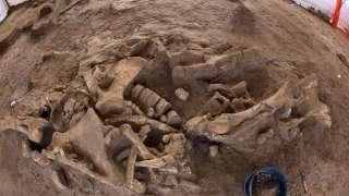 В Якутии нашли останки самых древних скелетных животных