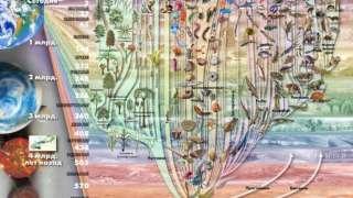 «Древо жизни» из микроорганизмов составили американские биологи