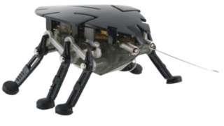 Калининградские инженеры создали робота-разведчика, которого назвали «Тараканом» из-за внешнего сходства