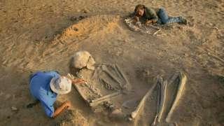 Британский антрополог Рассел Демент разгадывает тайны скелетов чрезмерно высоких людей