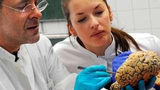 Ученым удалось вырастить в лаборатории взрослый мозг