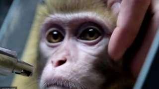 Роскосмос планирует отправить на Марс обезьян