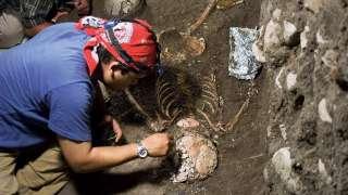 В Испании нашли останки самого древнего общего предка обезьян и людей