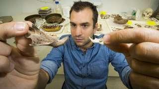 Австралийские археологи обнаружили останки древней огромной крысы