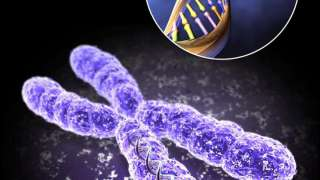 В 2017 году ученые будут редактировать геном человека