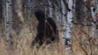 Охотнику удалось заснять на камеру йети