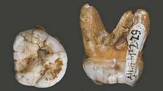 Молекулярные антропологи нашли нового предка человека