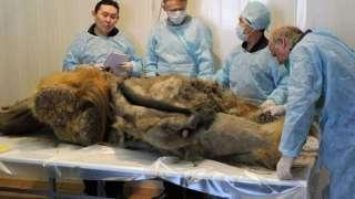 Якутия – центр внимания палеонтологов со всего Мира