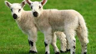 КНР собирается соорудить крупнейший в мире Центр клонирования животных