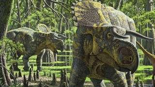 В Северной Америке палеонтологи нашли останки новых рогатых динозавров