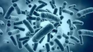 Апокалипсис с участием бактерий – миф или реальность