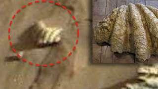 На фотографиях Марса уфологи нашли ракушку