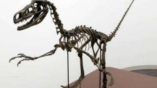 На территории Японии нашли останки седьмого динозавра