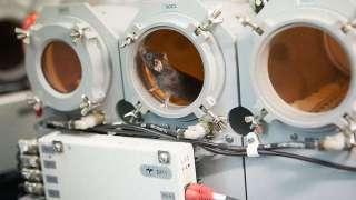 РАН и грандиозная мышиная экспедиция в космос
