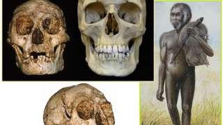 Ученые определили, когда вымерли индонезийские «хоббиты»