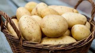 Марсианское меню может быть картофельным